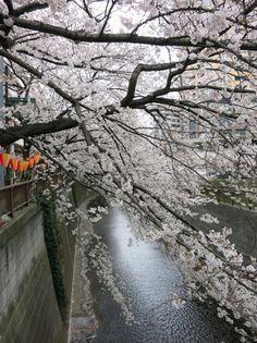 #CherryBlossoms #Tokyo #Japan #Kapital #Anthropologie #AnthroBlog