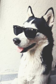 puppies who wear ray bans.