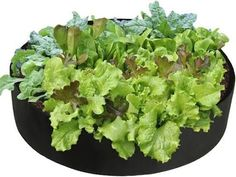 50 Gallons Round Planting Container Grow Bags Breathable Felt Fabric Planter Pot for Plants Nursery Pot Fabric Raised Garden Bed Metal Raised Garden Beds, Plants For Raised Beds, Raised Planter Beds, Planting Vegetables, Growing Vegetables, Small Flower Gardens, Plant Bags, Vegetable Boxes, Horticulture