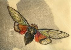 Watercolor painting on vellum- Cicada- Insect Art by Mindy Lighthipe