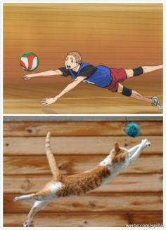 | Haikyuu!! | Where is the difference?