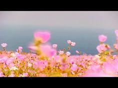 #10 Desierto florido - Atlas Vivo de Chile - YouTube