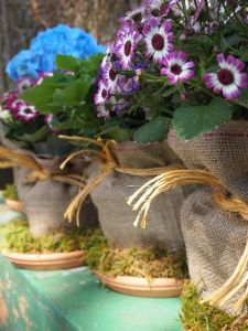 Disguise supermarket plastic pots with burlap and moss