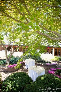 McVay Courtyard- Pretty in Pink!