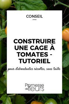 Comment construire une cage à tomates pour les cultiver sans taille et obtenir de généreuses récoltes ? Découvrez notre tutoriel illustré et nos conseils.