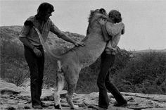 "The best story I've ever heard was about ""Christian the Lion"" -- it's a tear jerker but it's a happy story. Check it out at: http://www.youtube.com/watch?v=Sju3kSTAzdI"