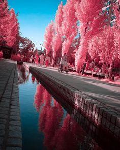 Noe Alonzo Pink Purple, Photography, Photograph, Photography Business, Photoshoot, Fotografie, Fotografia