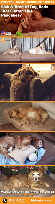 Golden Retriever Beds by Big Barker.... America's most luxurious dog bed for big dogs like Golden Retrievers | See more pictures at http://bigbarker.com