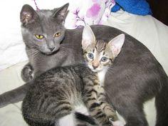 My cat http://ataleofbeauty.wordpress.com/2014/11/19/my-wonderful-cats-%E2%80%BF%E2%80%BF/
