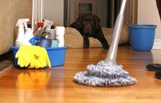 Mantenha a sua casa livre de cheiro a cachorro com essas dicas! #cachorro #limpeza #animais #casa