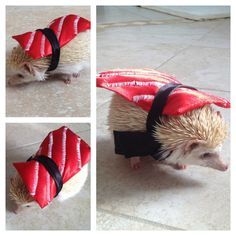 Sushi is totally in right now. | 25 Hedgehogs Trying To Escape Their Identity