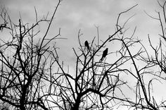 Birds in the Tree 8x10 metallic print by MemoriesByTessa on Etsy, $60.00  photograph by Tessa Fritzler  copyright 2013