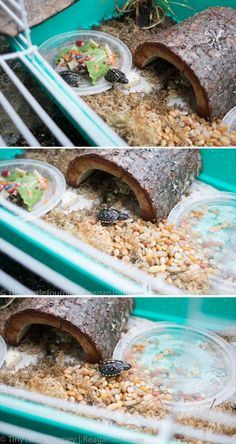 Your big tortoise is a source of pleasure to you. You bought the turtle so you can have more fun with family members and friends. But you need to take care Turtle Cage, Turtle Pond, Pet Turtle, Tiny Turtle, Turtle Aquarium, Tortoise House, Tortoise Habitat, Tortoise Turtle, Baby Tortoise