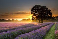 Beaming sun over Epsom, Surrey Picture: Daniel Hannabuss of Wilmington, Kent