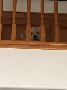 Look whose spying on me from the upstairs balcony… None other than Jazz.