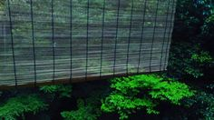 テラスに簾がつきました でも台風なので外します  #箕面 #箕面瀧道 #日本茶 #CHAnoMA #Minoo #Matcha #日本酒 #抹茶 #煎茶 #箕面ビール #古本#ブックカフェ#ひなたブック#箕面瀧道ガイド