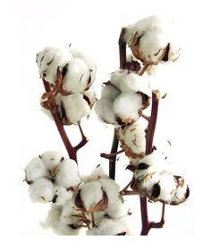 1 an de #mariage : noces de coton