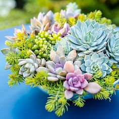 Bowl of succulents