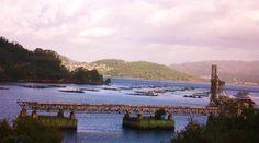 Bateas desde el tren (Galicia)