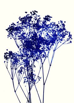Baby's Breath_Indigo Art Print