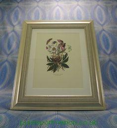 Portmeirion Botanic Garden Framed Genuine Print Hellebore