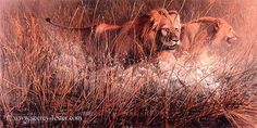 MARSH AMBUSH    Not Just Wildlife Art of John & Suzie Seerey-Lester