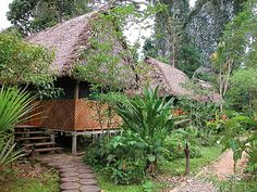 Rainforest lodge in Manu National park