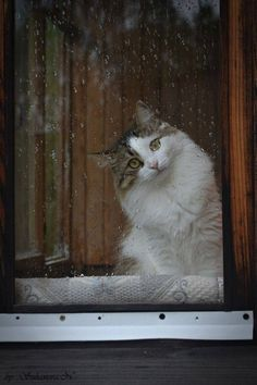 Sadness ~ Photo by Suhanova N . Tabby Cat sitting at a Rain-splashed Window . Cute Cats And Kittens, Big Cats, Crazy Cats, I Love Cats, Cool Cats, Animal Original, Animal Gato, Cat Window, Cat Sitting