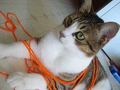 Annabelle #cat #yarn