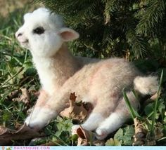 This is one of the most precious things I've ever seen.  Oh, baby llama, how are you soooooo cute?!?!!