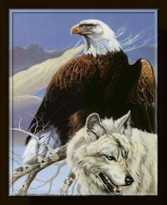 Native American eagles birds - Google Search