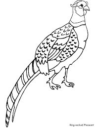 Image Result For Pheasant Images Farm Animal Coloring Pages