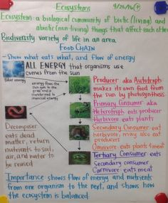 Biochemistry Final Review Sheet Properties of Water Macromolecules Nitrogen Cycle Ecosystems: Food Chains Populatio...