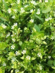 Bonsai, Herbs, Tea, Interior Design, Nest Design, Home Interior Design, Bonsai Trees, Interior Designing, Herb