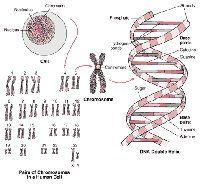 Biologisk ordbog til genetik. Af Thorbjørn Jensen