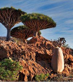 L'île de Socotra, au Yemen