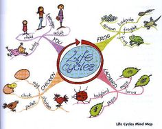 Mind Map - Life Cycles