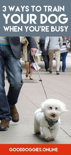 Check out these dog training tips for the on the go pet parent. via @KaufmannsPuppy