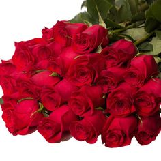 All Flowers, Beautiful Roses, Red Roses, Beautiful Pictures, Bouquet, Plants, Google, Freedom, Amazing