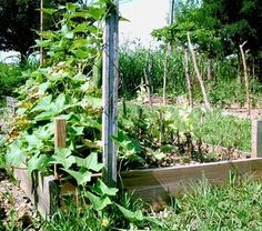 How to Use Recycled Building Material to Build Raised Garden Beds thumbnail