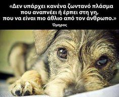 κανενα Wise Man Quotes, Men Quotes, My Best Friend, Best Friends, Puppy Quotes, Schnauzer Puppy, Schnauzers, Greek Quotes, Pet Health