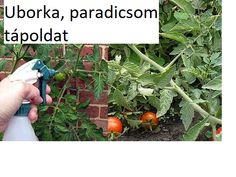 Gardening, Plants, Blog, Vegetable Recipes, Lawn And Garden, Blogging, Plant, Planets, Horticulture