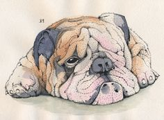 Dogs on Behance