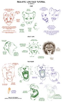 Realistic lion face drawing tutorial