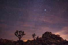 Joshua Tree long exposure of stars night sky.