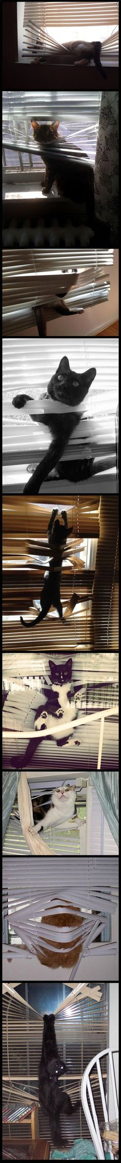 Cats and blinds
