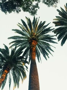 Palm trees just make us happy