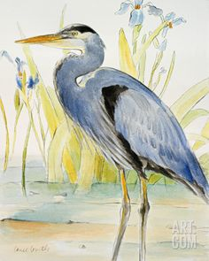 Great Blue Heron Art Print by Lanie Loreth at Art.com
