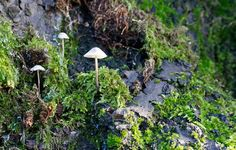 Mini mushrooms in Moss growing on a tree | Flickr - Photo Sharing!