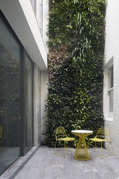 Planted wall in light well between Victorian restoration by B.E Architecture and modern extension provided planted outlooks to all the rooms as well as a private outdoor terrace
